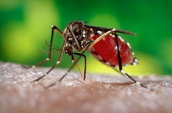 Dengue on the rise – Colombo, Gampaha among  twelve districts at risk